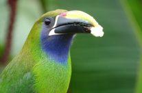 """22 november """"Vogels in Costa Rica"""". Start 19:30, bezoekerscentrum Kraaienberg."""